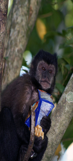 mono cai
