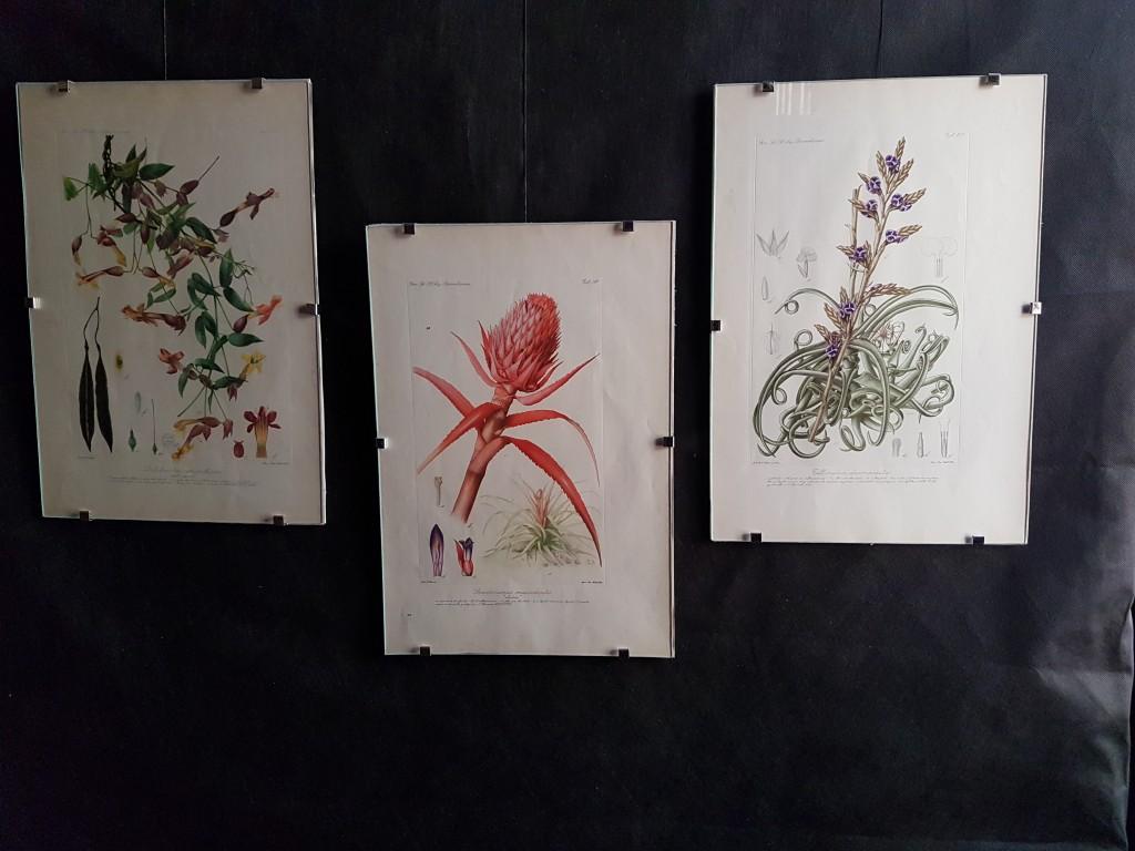 muestra de ilustraciones cientificas (16)
