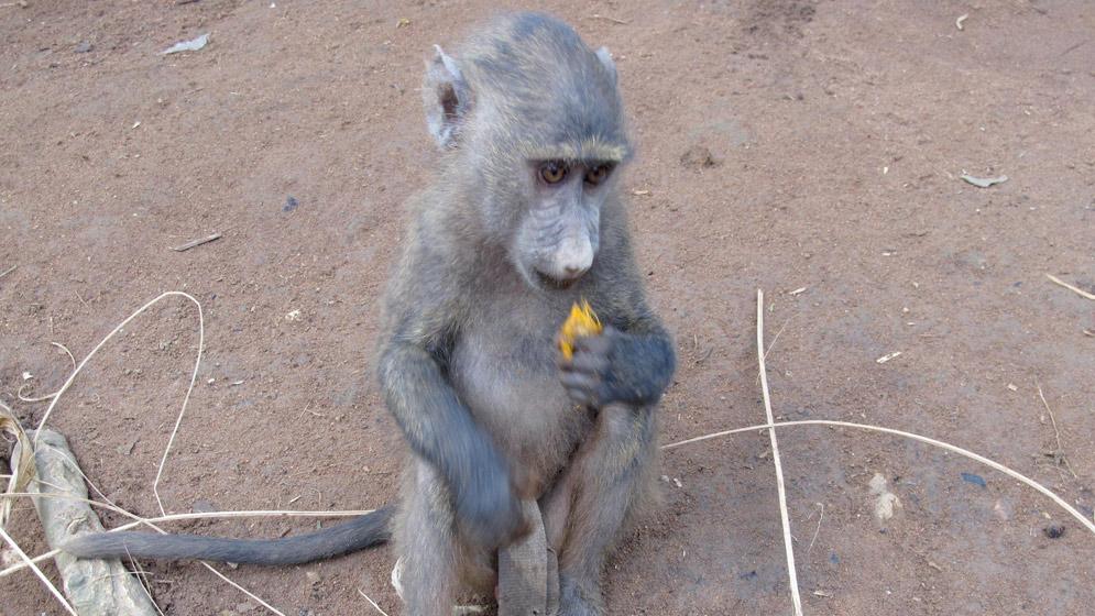primates-00-web