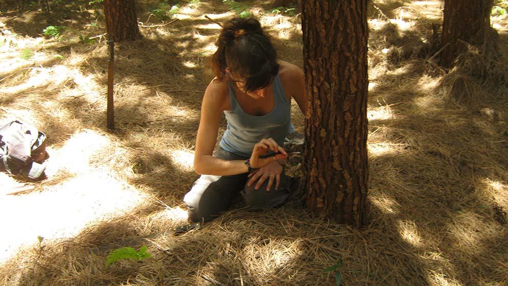 Comprueban-que-las-plantaciones-de-pinos-modifican-la-fauna-nativa-de-Misiones-02